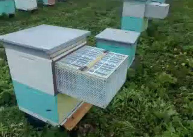 Пчеловодство своими руками видео фото 276